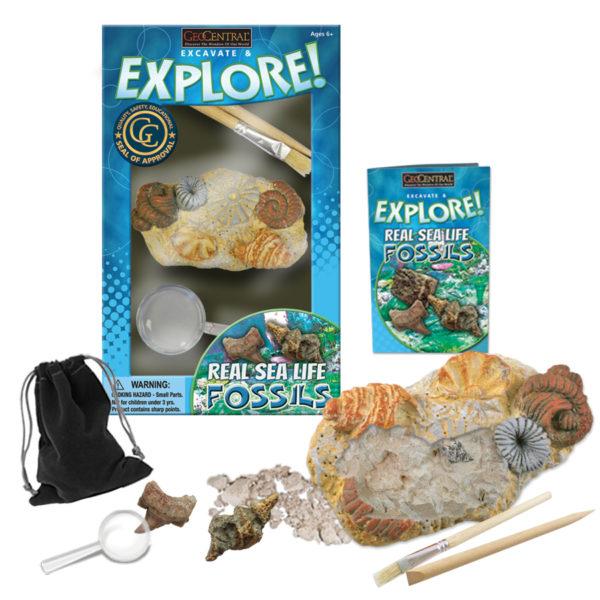 Excavate & Explore Sea Life Fossil Kit