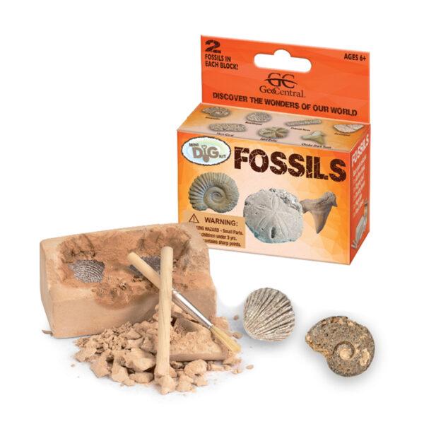Fossils Mini Dig Kits