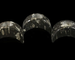Orthoceres Arched Candle Holders