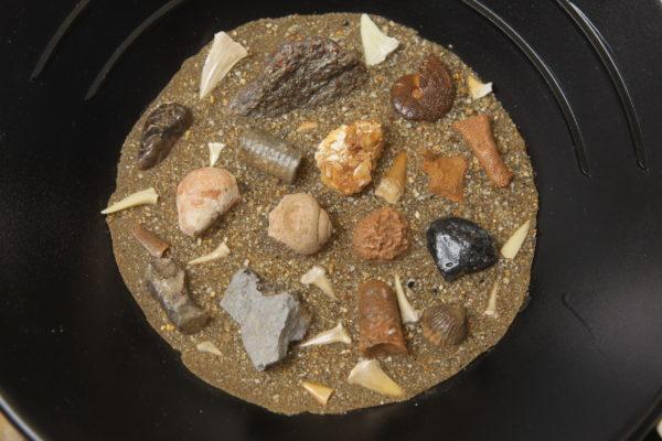 Mining Bucket with sand, Shark Teeth & Fossils