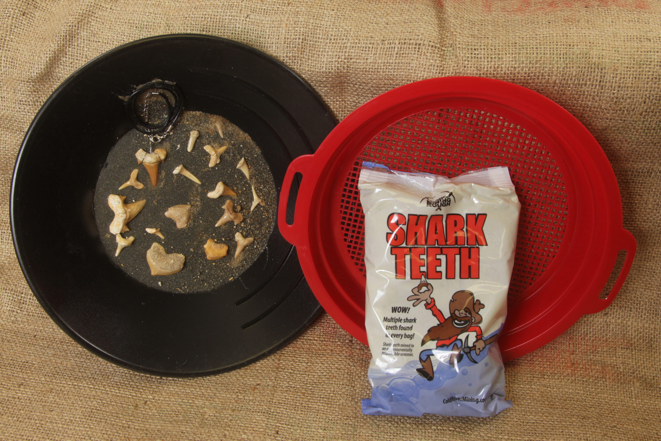 Small Shark Tooth bag fossil kit with sifter