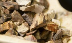 Rough Petrified Wood Rough Pieces 1 pound front view