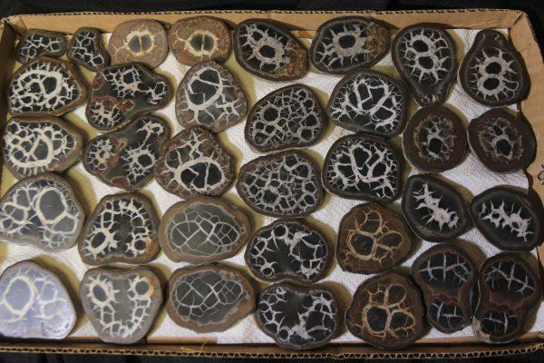 Several Pairs of Dragon Stone Septarian Nodules