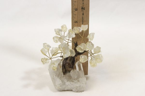Small Crystal Point Gem Trees with ruler for size comparison