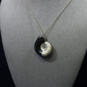 Black Ammonite Pendant
