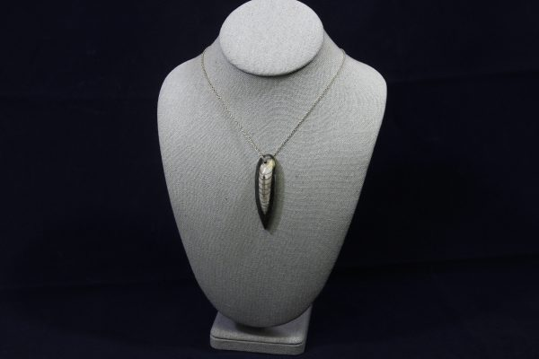 Orthoceras Fossil Pendant front view