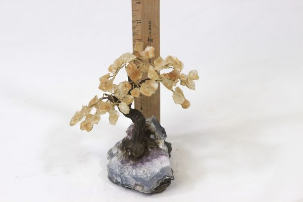 Medium Citrine Crystal Points Gemstone Tree with ruler for size comparison