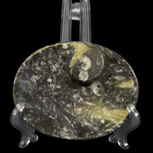 Black Ammonite and Orthoceras Oval Tray