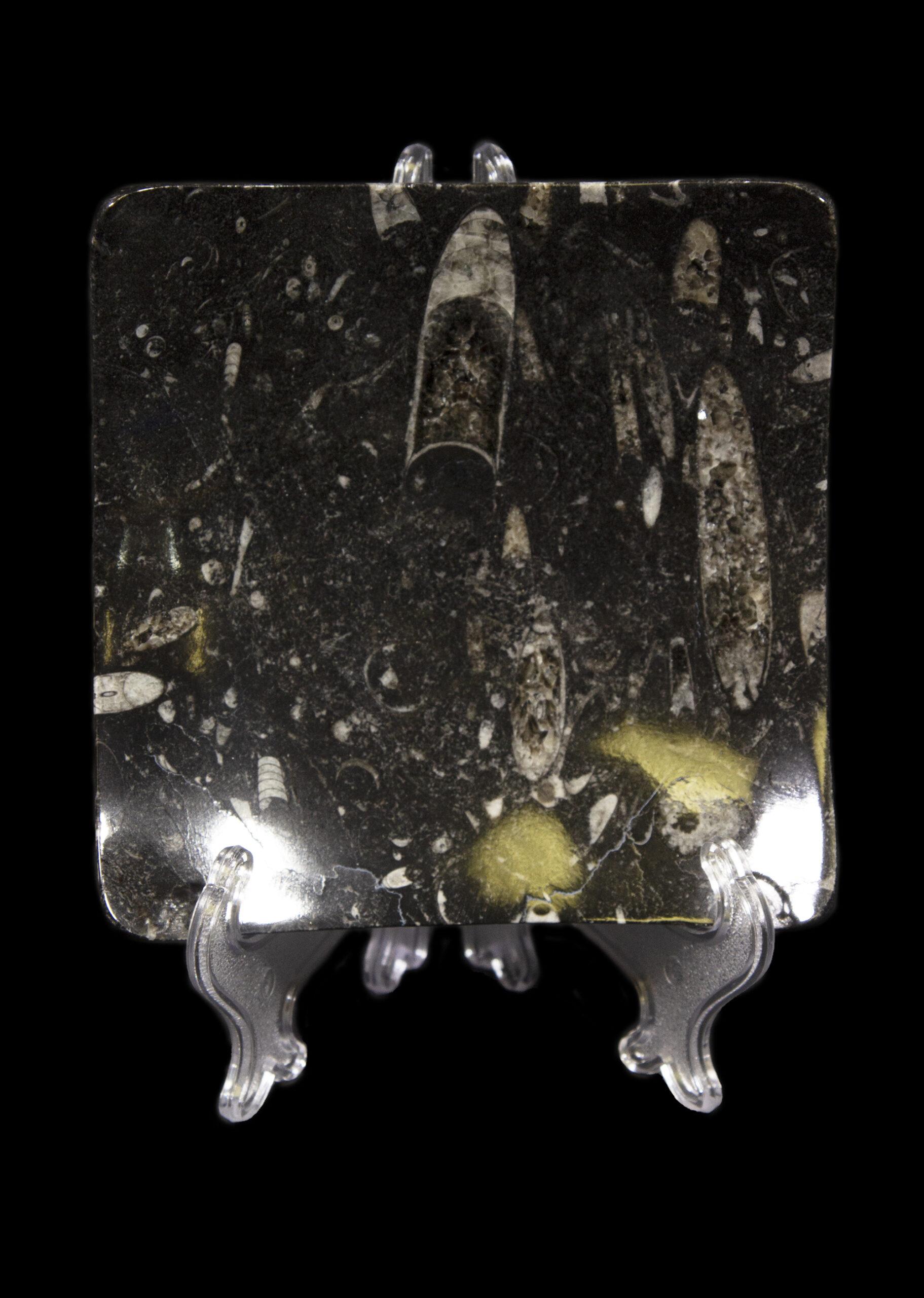 Black Orthoceras Dish